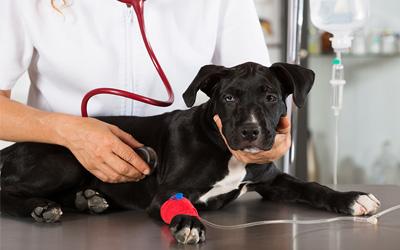 fredericksburg veterinary emergency